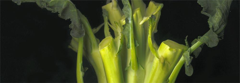 broquil minima quelic berga